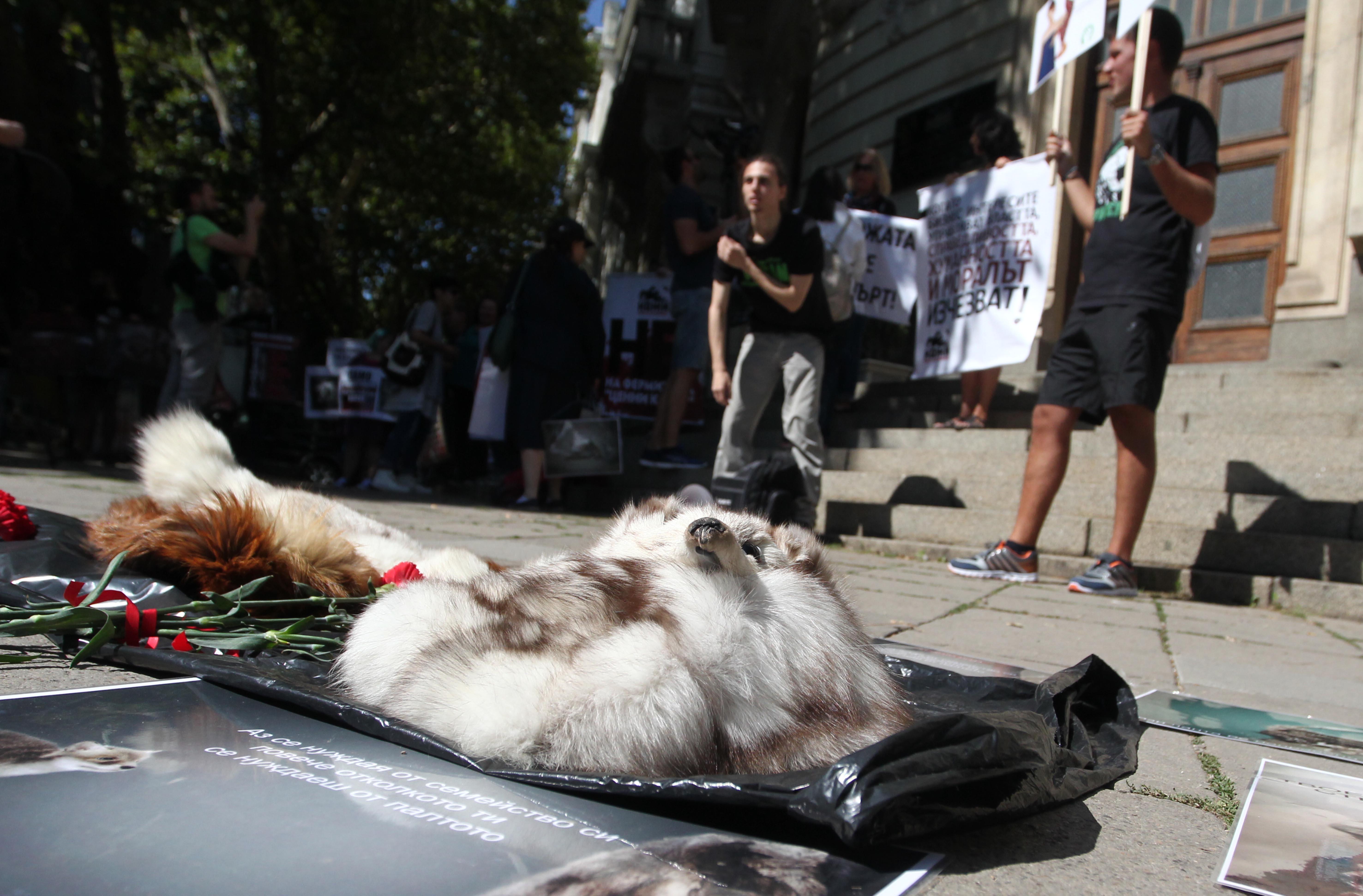 Протест срещу фермите за норки в България