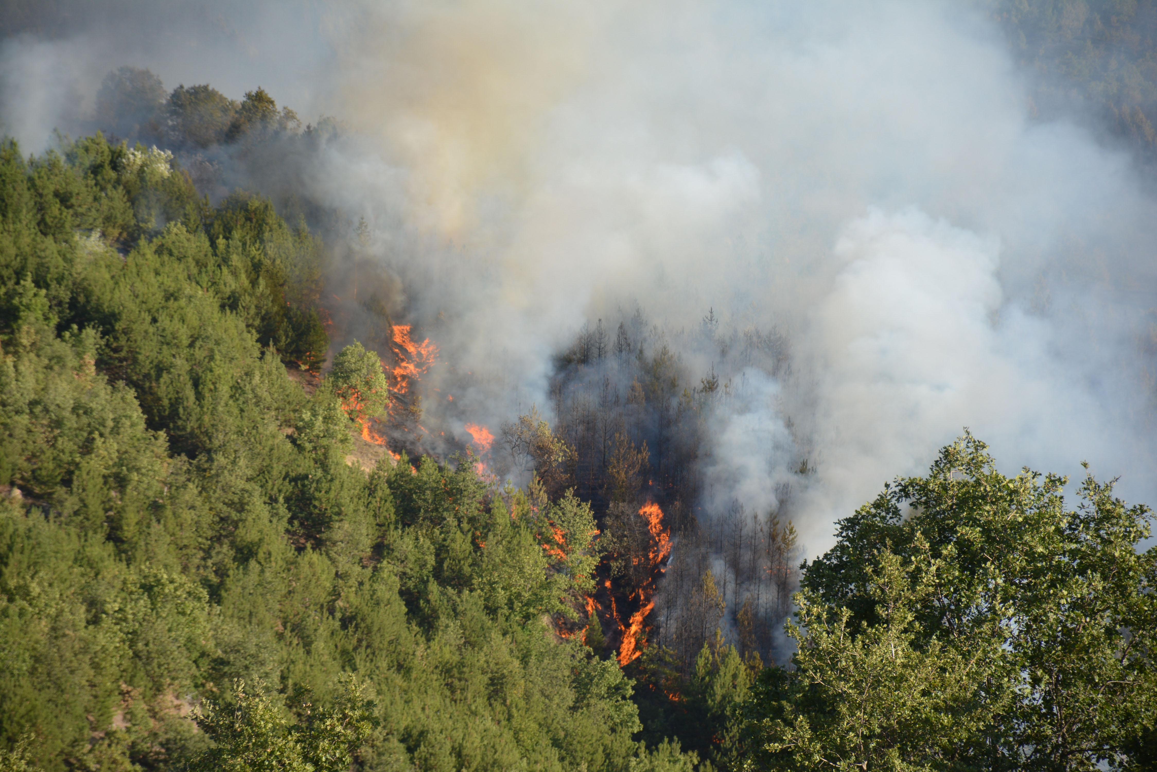 Говедар подпалил с цигара пожара в Кресненското дефиле