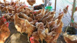 Регистрираха Нюкясълска болест по птиците край Видин