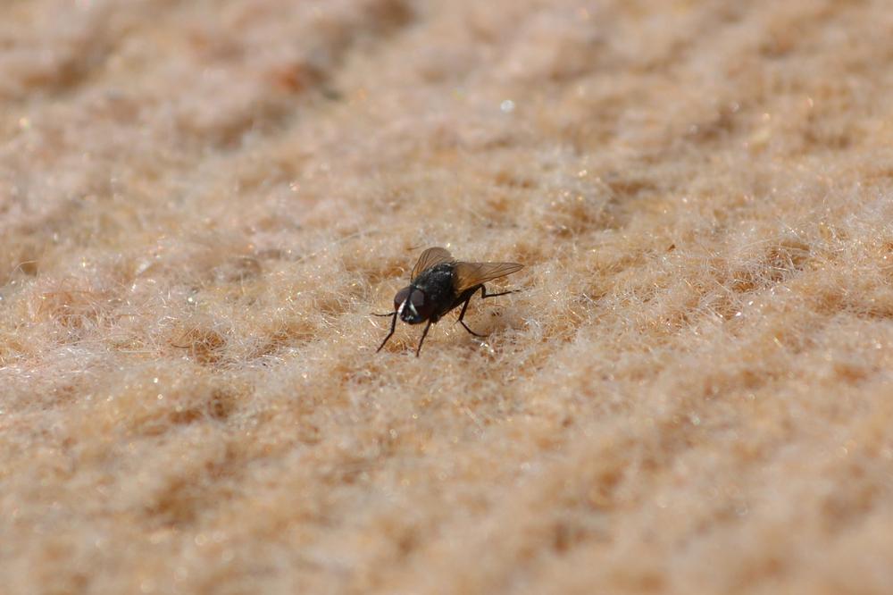 Най-много видове насекоми се заселват в хола