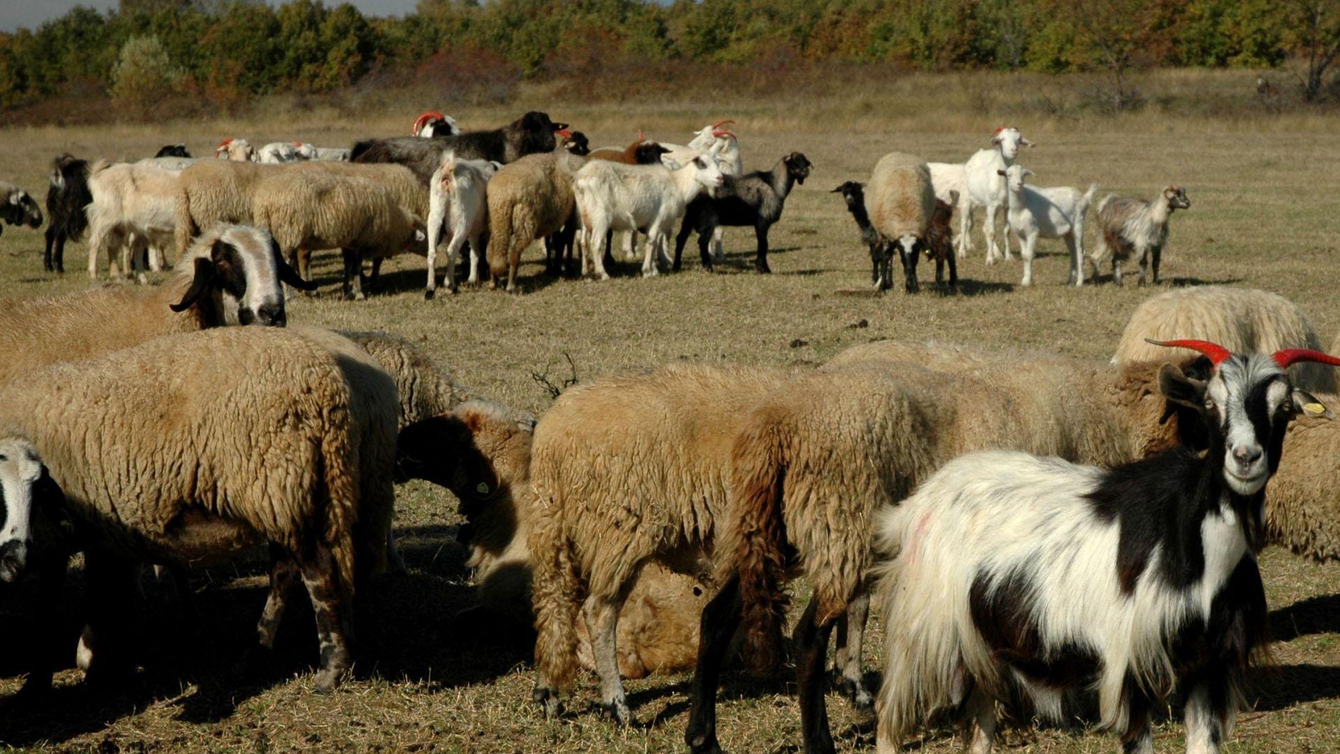 Спряха евтаназията на животни, ще има активна дезинфекция в и около заразените зони