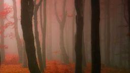 Направете вълшебна медитация в сюрреалистичните гори на Янек Седлар
