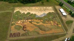 Художник нарисува картина на Ван Гог на 5000 кв. м