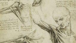 Анатомичните рисунки на Леонардо да Винчи