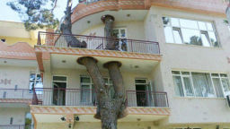 Могат ли сградите да имат сърца на дървета