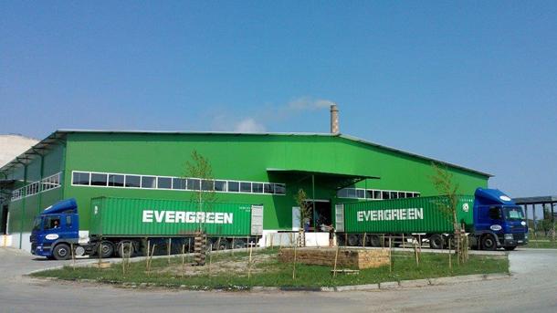 Заводът за целулоза в Свищов заработи отново
