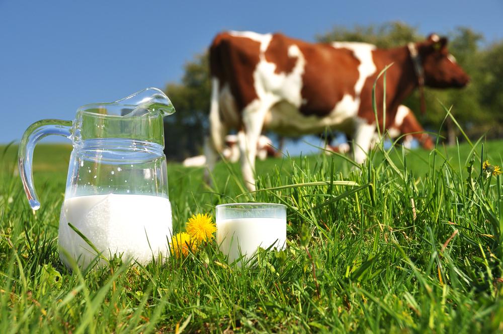 Пълномасленото мляко е полезно за сърцето