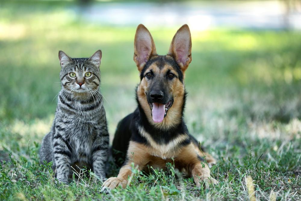 Кой е по-умен: кучето или котката?