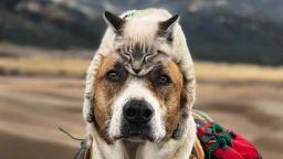 Куче и котка обичат да пътуват и изследват света заедно