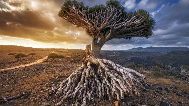 Сокотра - най-странното място на Земята според ЮНЕСКО