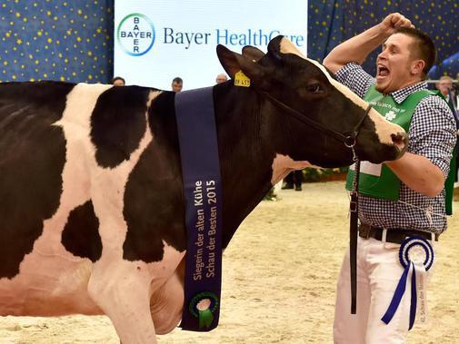 Германска крава №1 излиза в отпуск по майчинство
