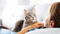 Домашна котка хвана кралски питон и спаси семейството на стопаните си