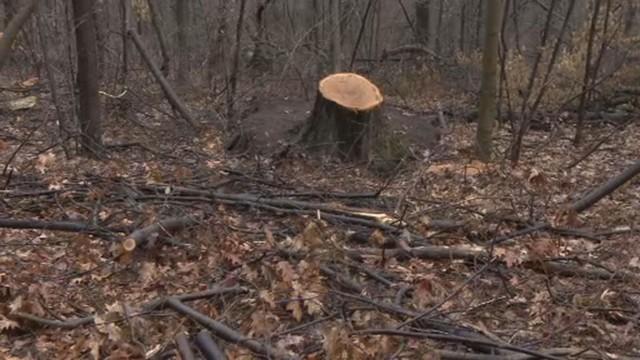 527 дървета отсечени в Борисовата градина