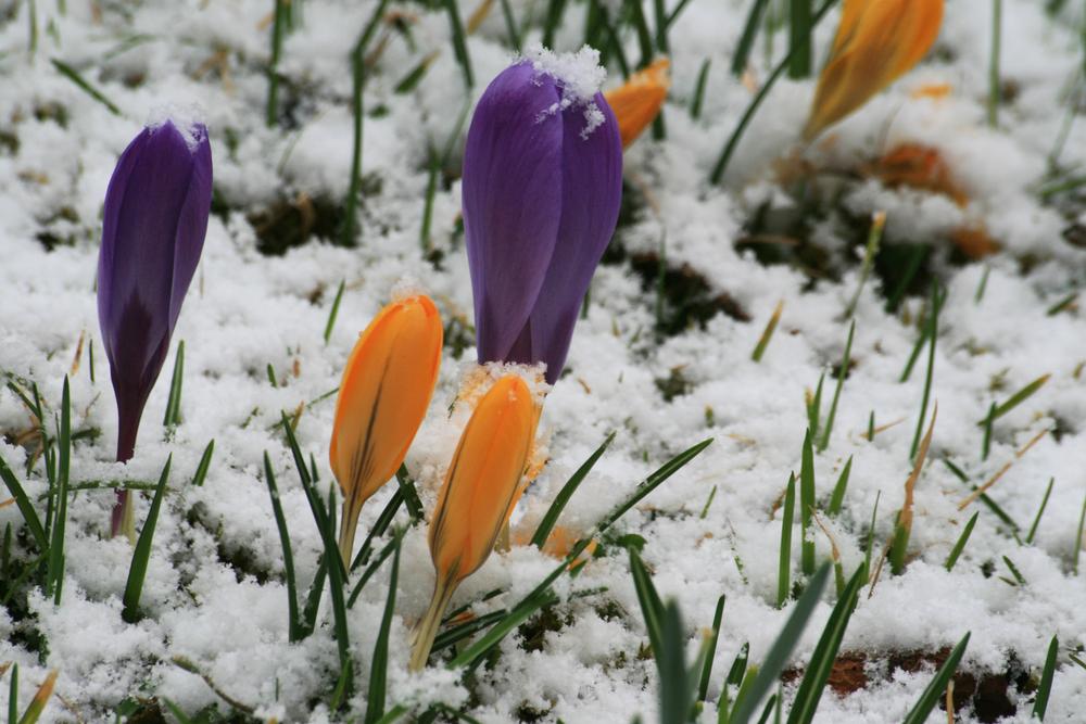 Топло до неделя, зимата се завръща идната седмица
