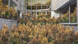 Призрачната красота на изоставени домове в Иран