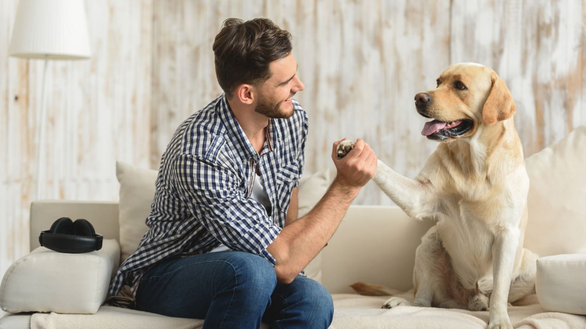Стопаните на кучета целуват по-често любимците си, отколкото партньорите си