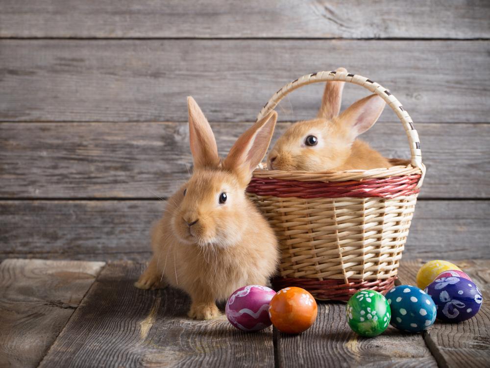 Заекът и яйцето: История на великденските обичаи