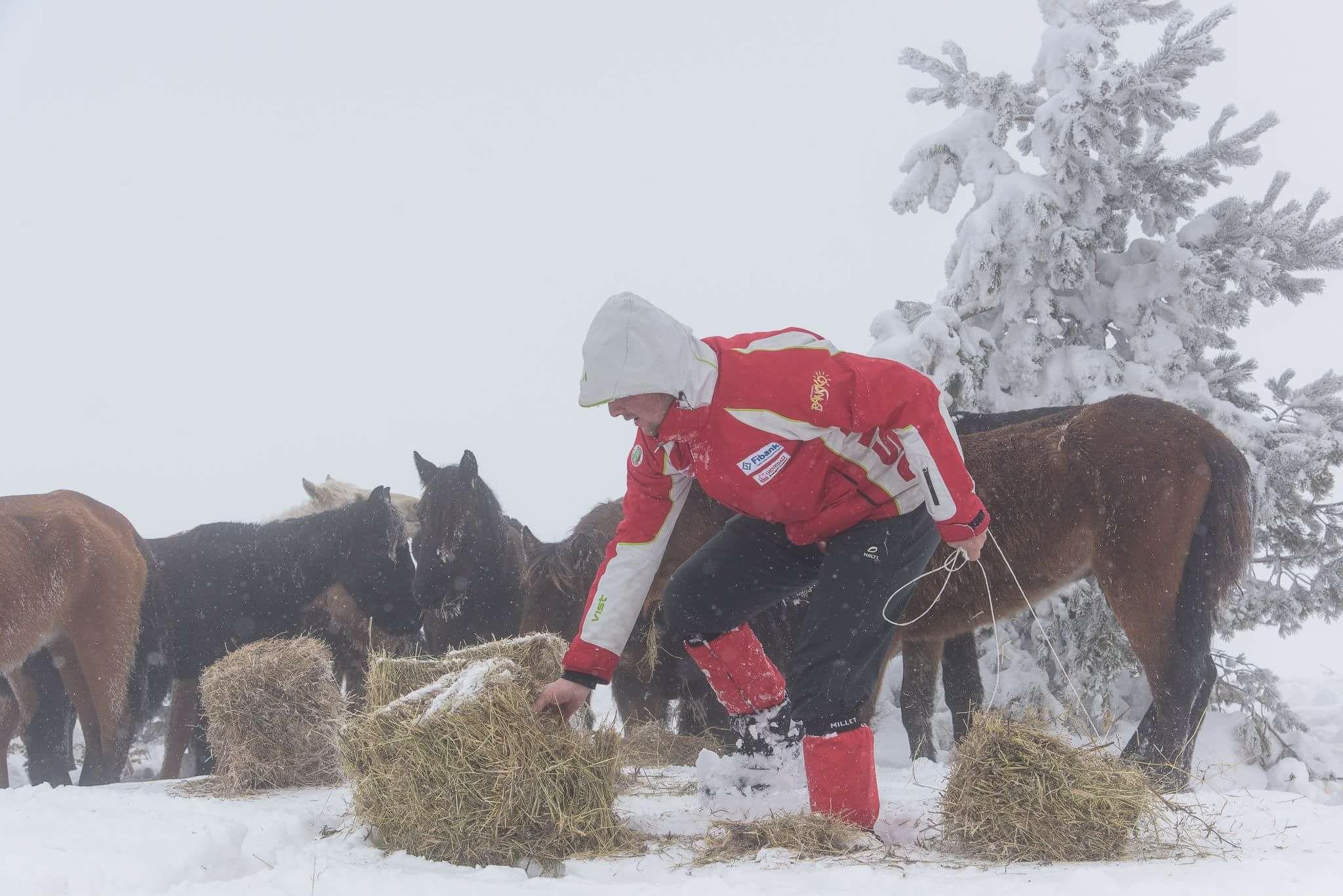 Собственик изостави 100 коня под връх Руен, 70 умряха