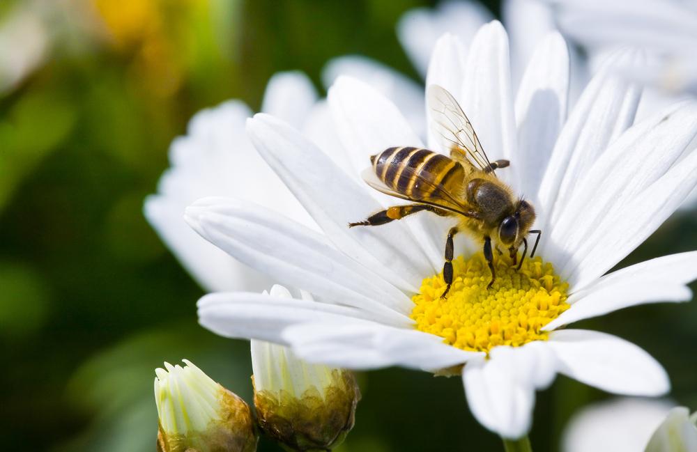 Учени създадоха пчела робот (видео)