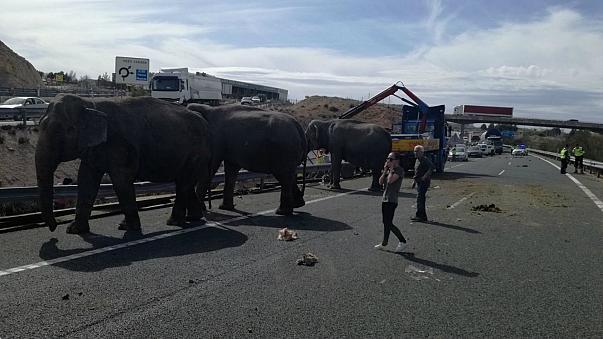 Слонове бегълци затвориха испанска магистрала
