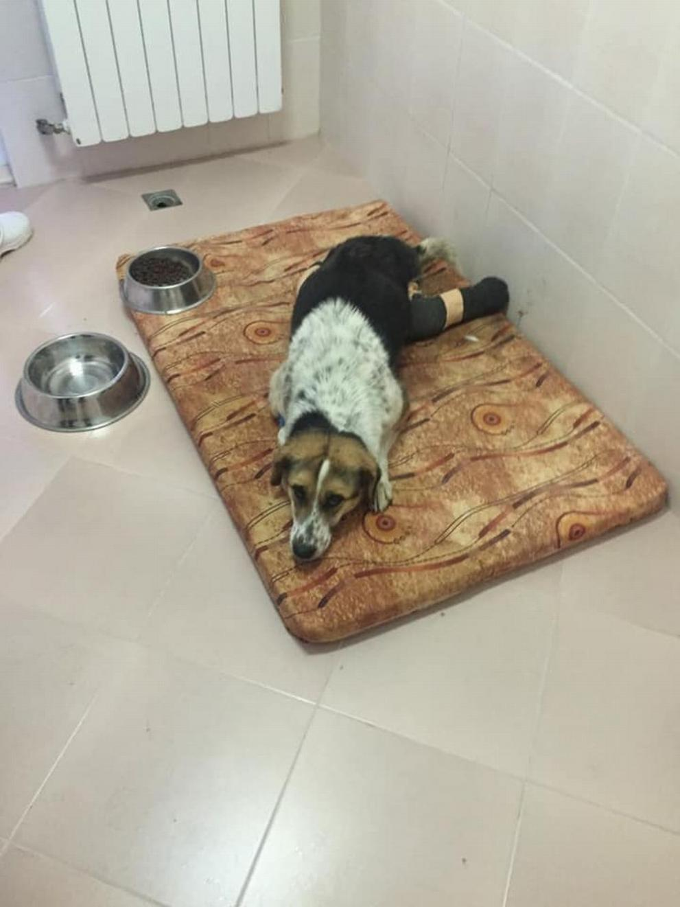 Борят се за живота на куче с отрязани лапи