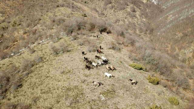 Откриха още 33 коня в Осоговската планина