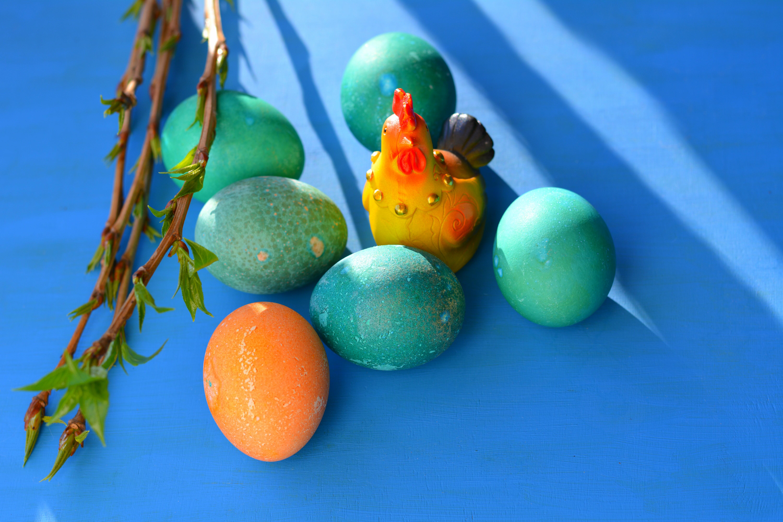 Любопитни факти за яйцата