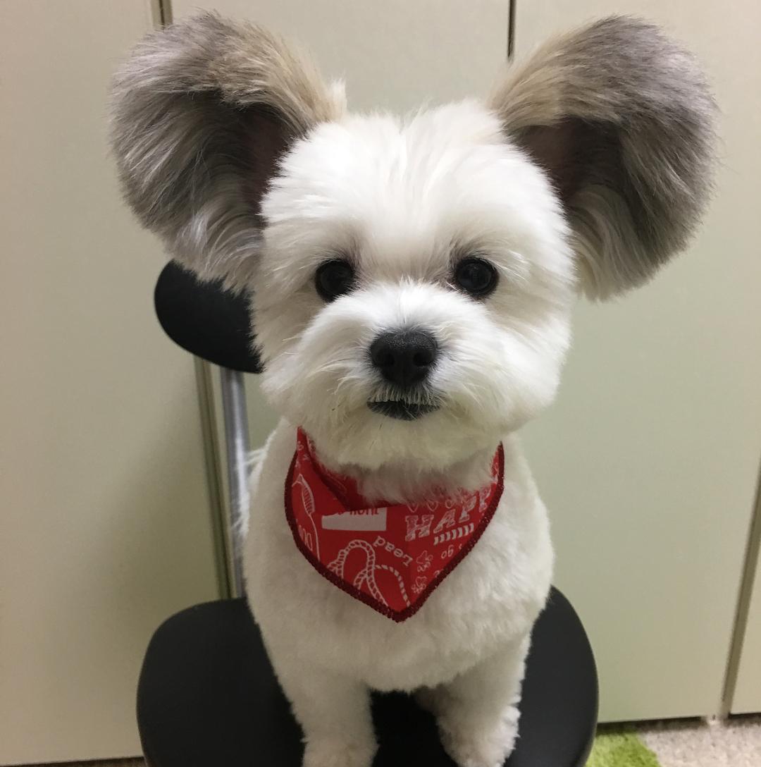 Куче с уши като на Мики Маус завладя интернет