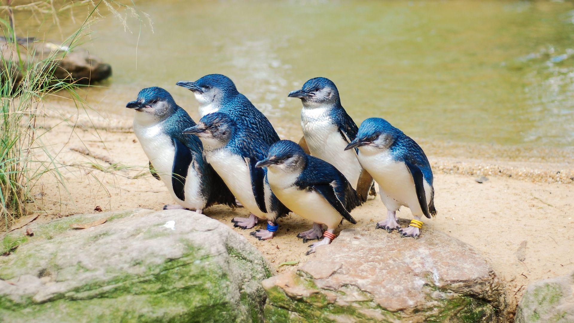 Хиляди пингвини открити мъртви в Нова Зеландия