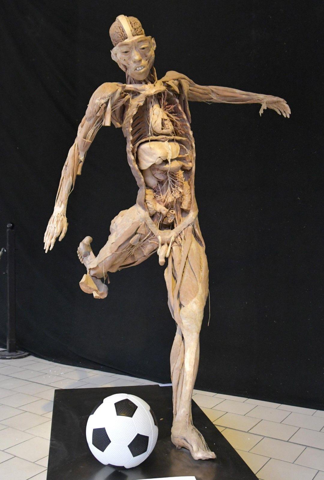 В столичен мол може да се види изложбата от истински човешки тела