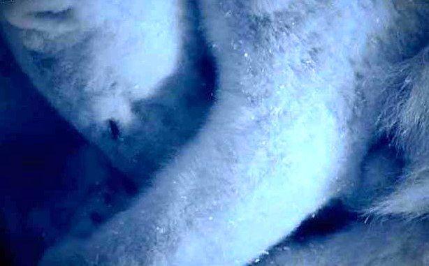 """Кадър с новороденото мече от поредицата """"Замръзналата природа"""" с Дейвид Атънбъроу"""