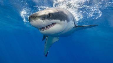 Американец оцеля след атаки от 2-метрова акула, гърмяща змия и мечка