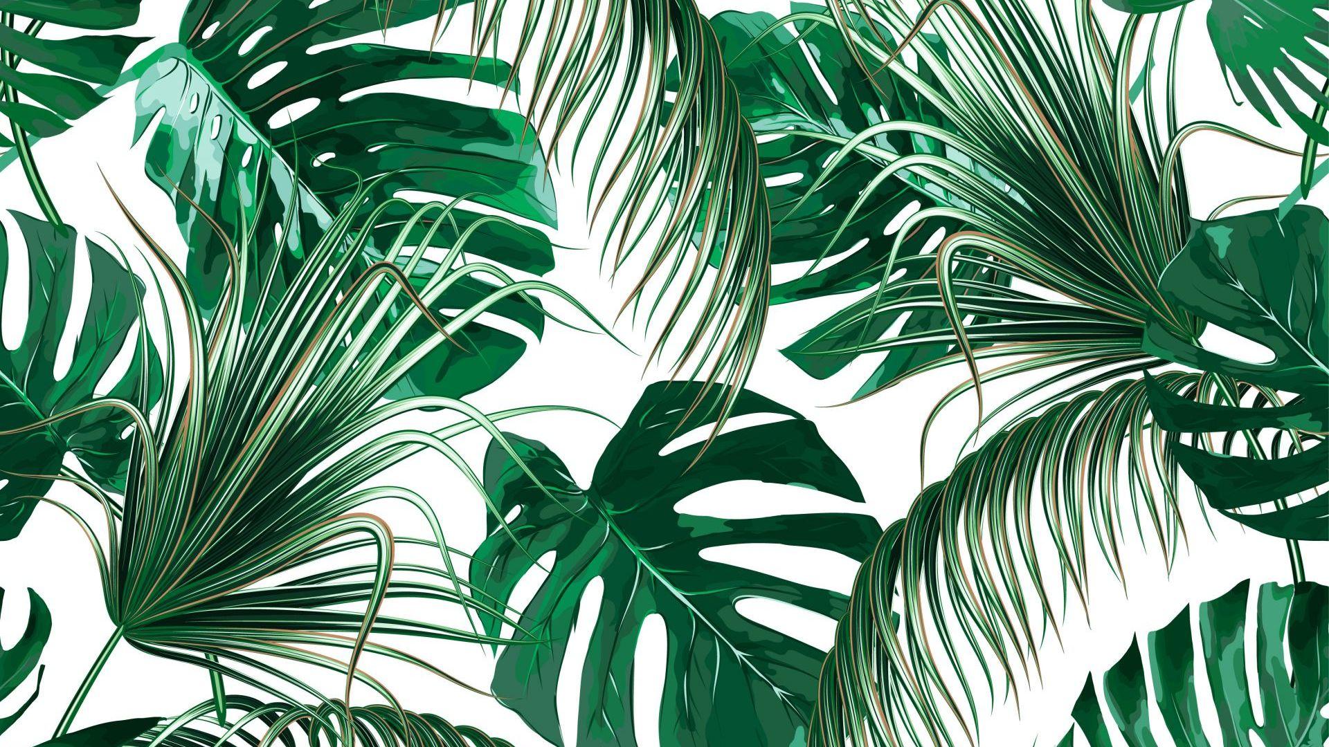 Растенията пречистват  въздуха в затворените помещения