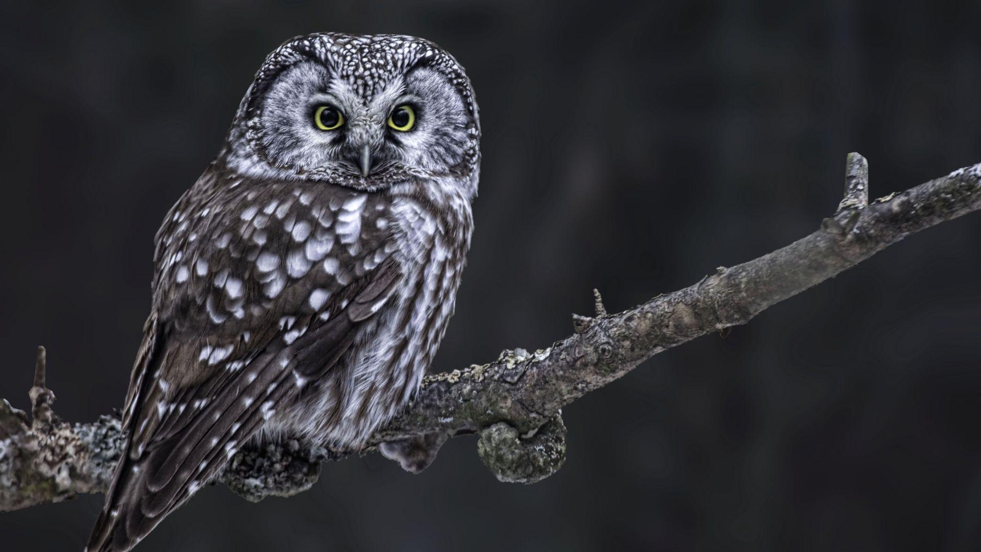 България е осъдена, защото не е защитила редки птици в Рила