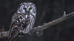 България е осъдена, защото не е защитила застрашени птици в Рила