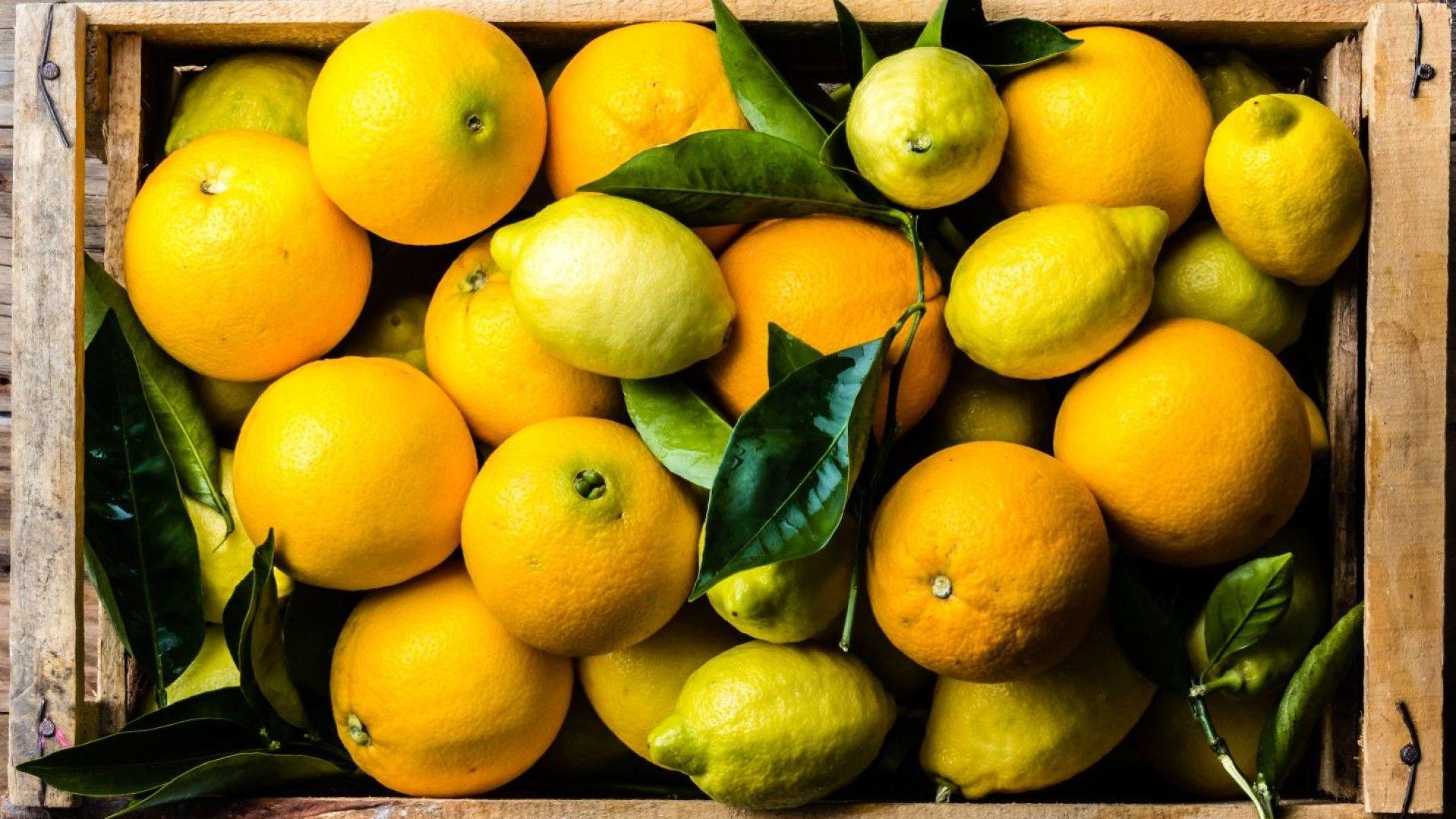 Двоен и троен скок на цените на портокали и лимони прогнозират учени