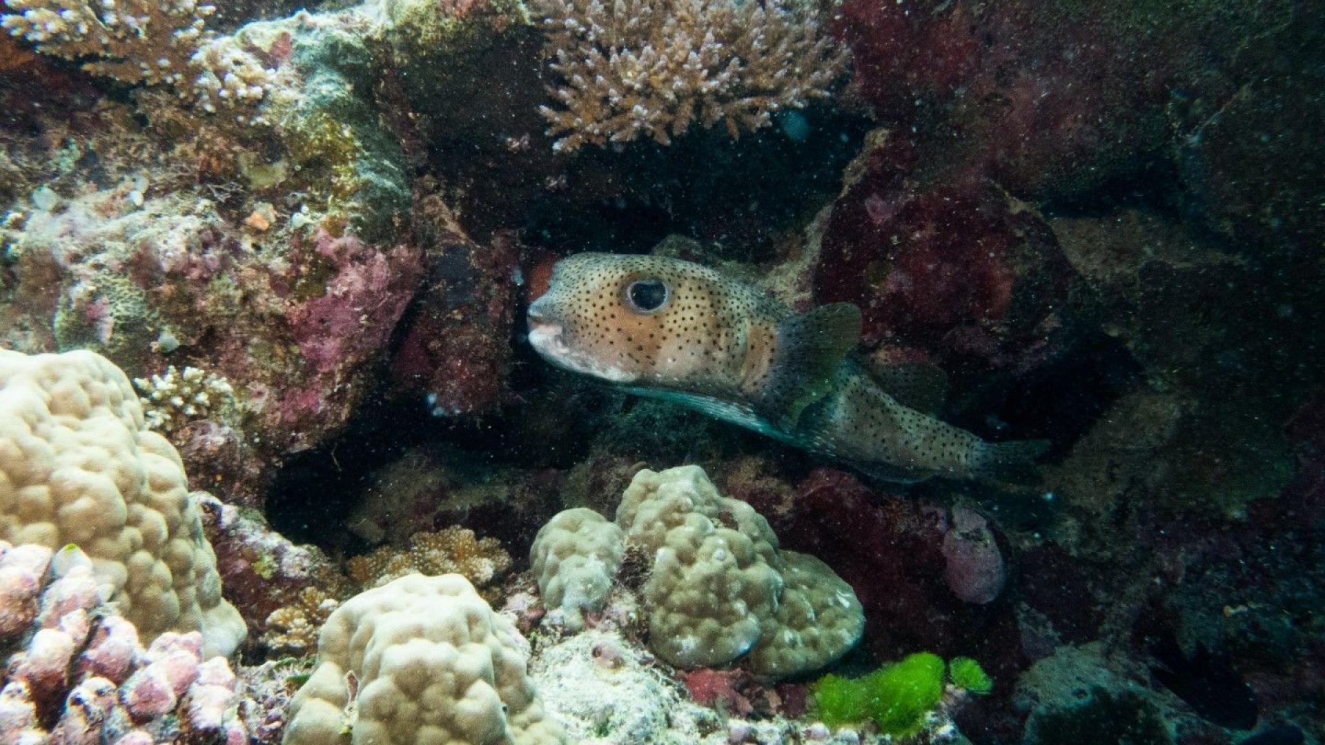 Австралия харчи 380 млн. долара за спасяване на Големия бариерен риф