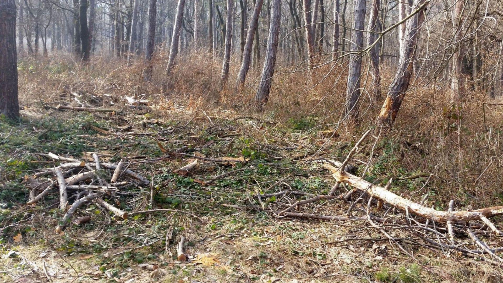 Интерпол: 100 млрд. евро се докарват за година от бракониерски сечи
