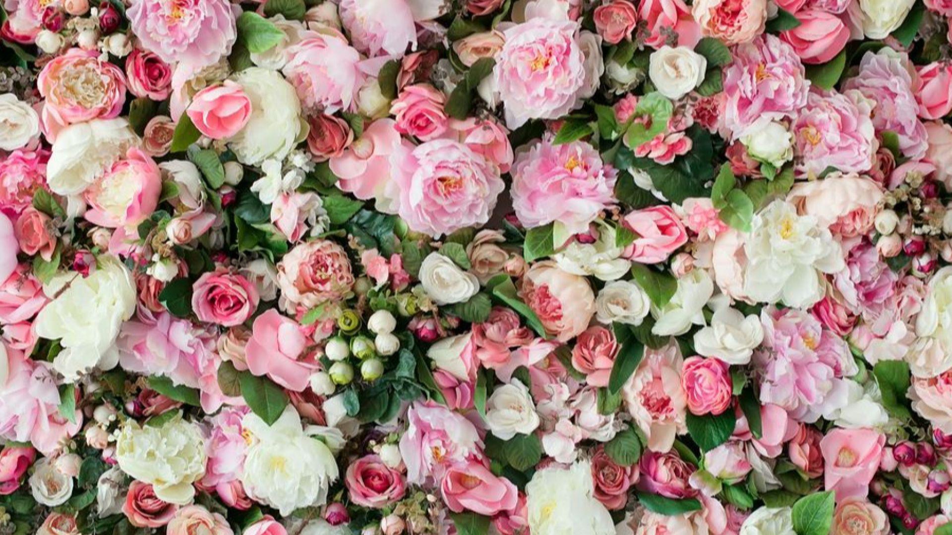 Учени разгадаха тайните на розата