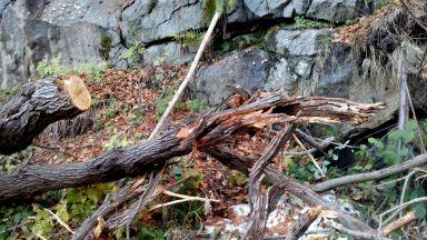 Смъртта на Петроханската гора