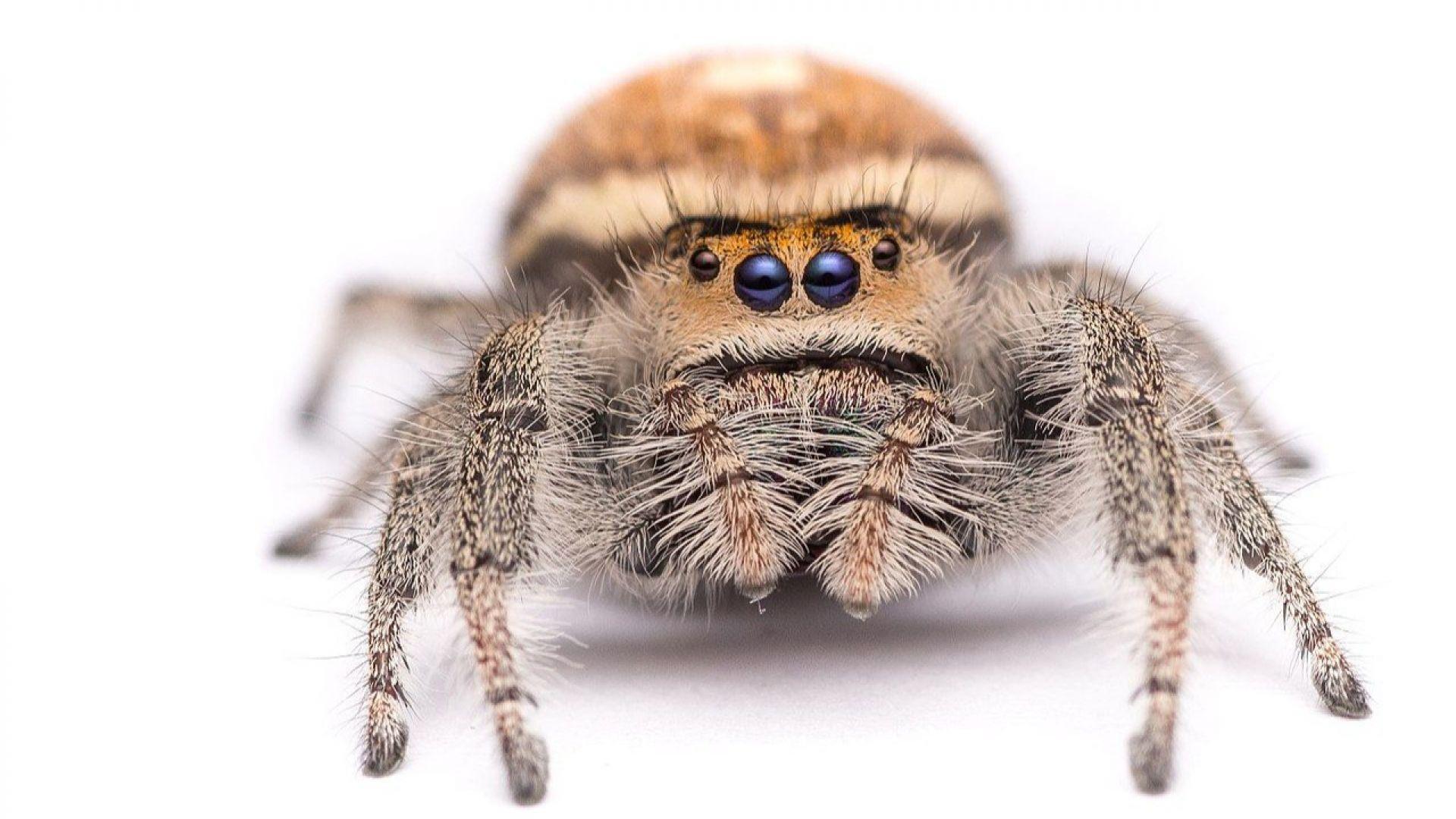 Учени разгадаха тайната на паяжината