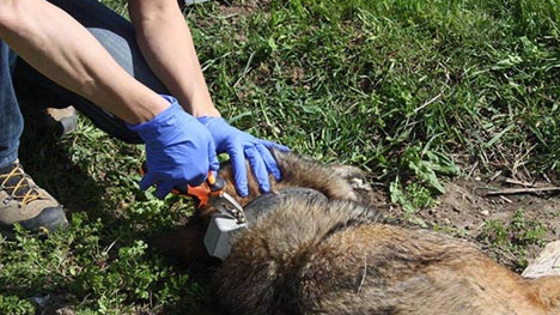 """""""Балкани"""": Тровят диви животни в Рила. Опасно е и за хората"""