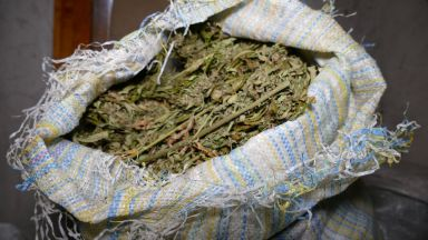 Португалският парламент легализира лекарства на основа на канабиса