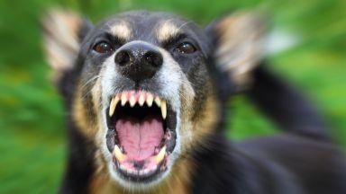 Домашно куче нахапа жестоко 2-годишно дете и майка му