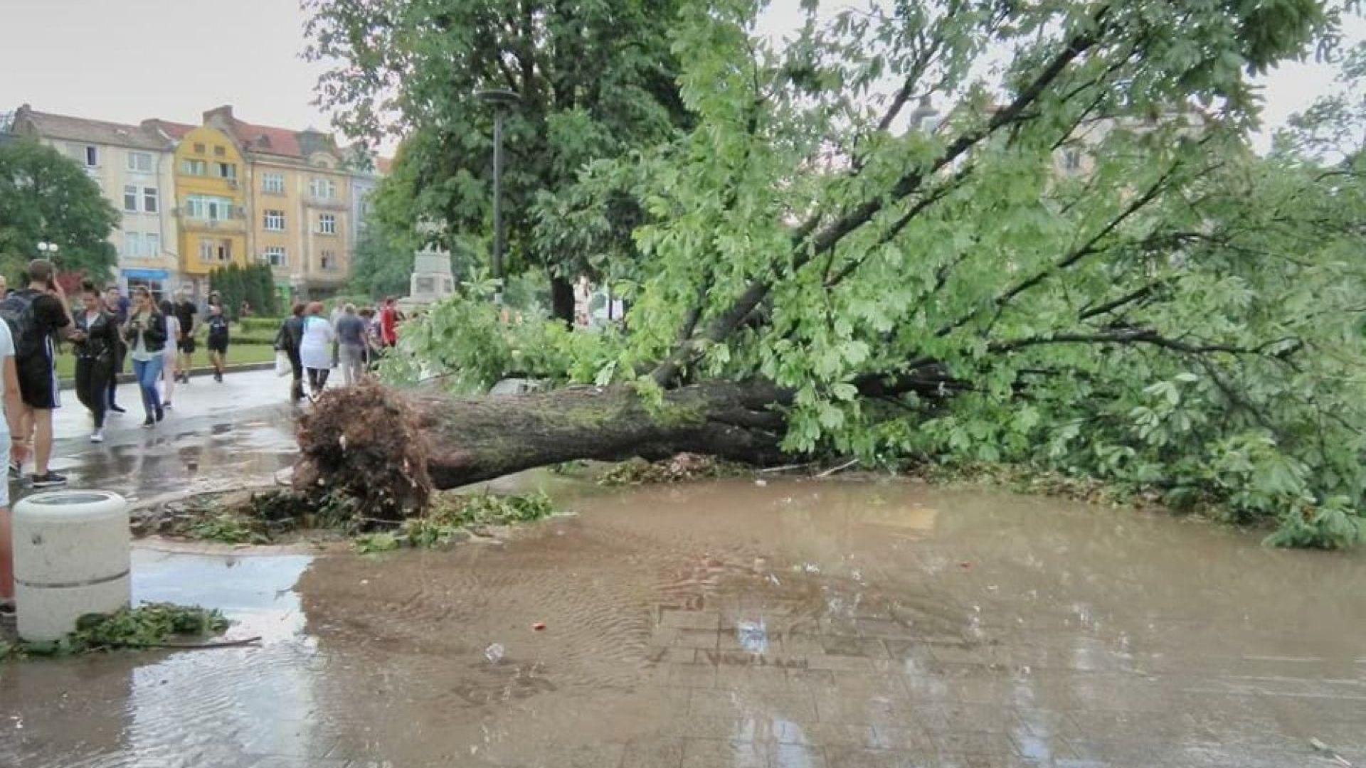 Премиерът прати вътрешния министър и шефа на пожарната в Плевен заради бурята