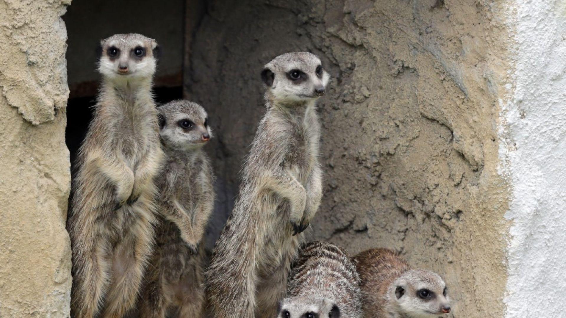 Рекорден брой животни са родени в Столичния зоопарк през 2018-а