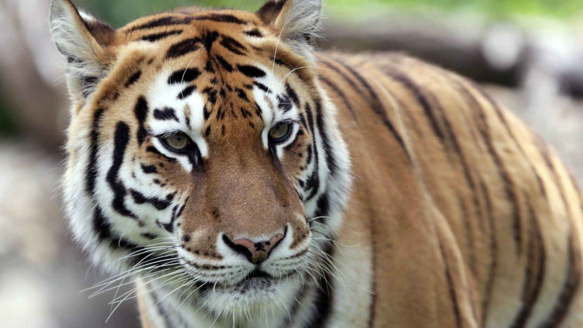Софийската зоологическа градина стана на 130 години (снимки)