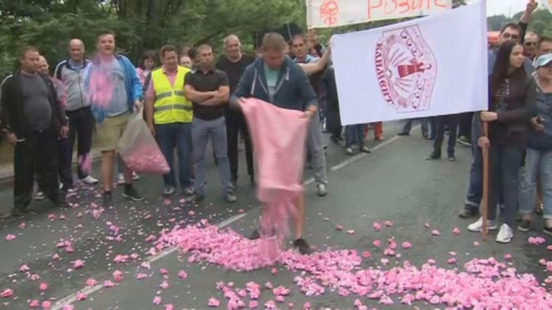 Пътна блокада: Производители на рози в Карловско протестират срещу ниската изкупна цена