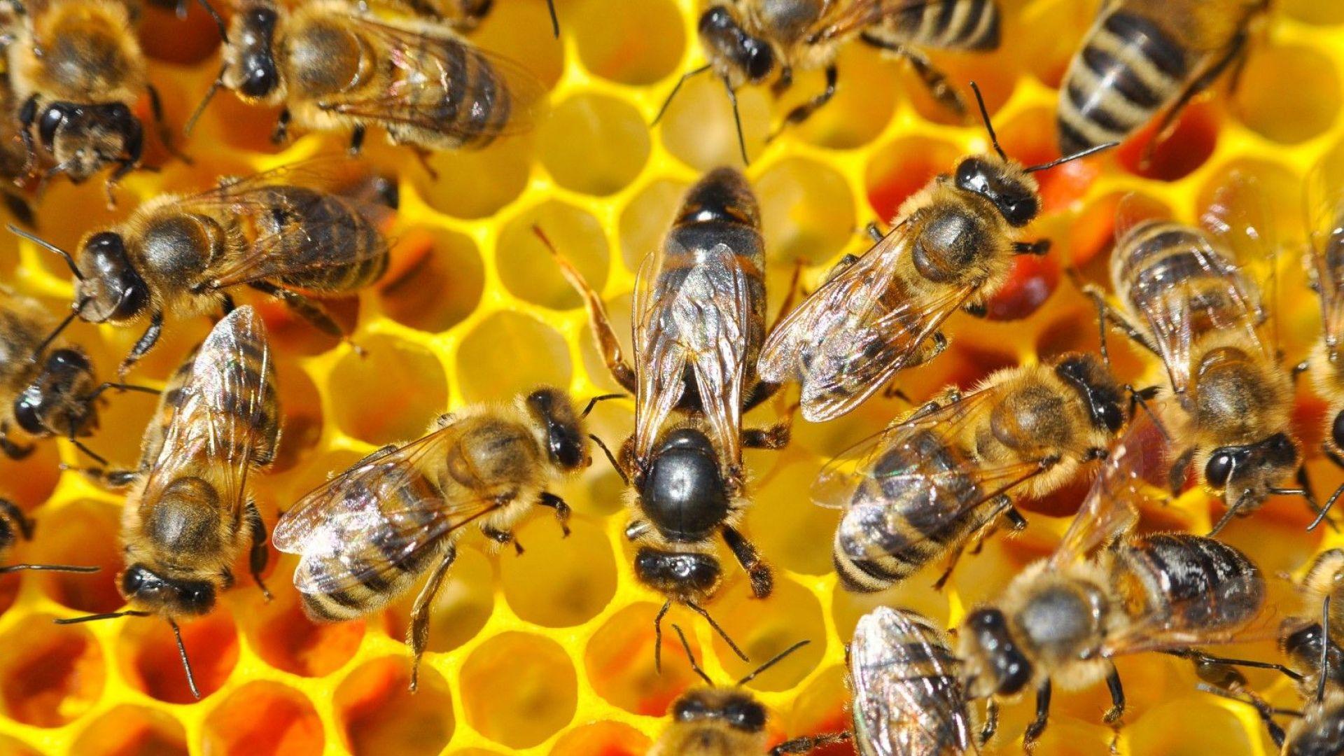 Пчеличката Мая няма да умре