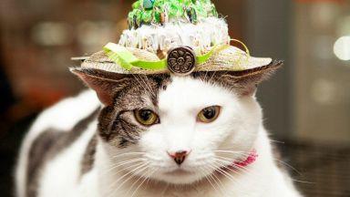 Котки позират с шапки, вдъхновени от кралската сватба (снимки)